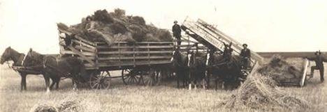 Grain Harvesting in Sydenham