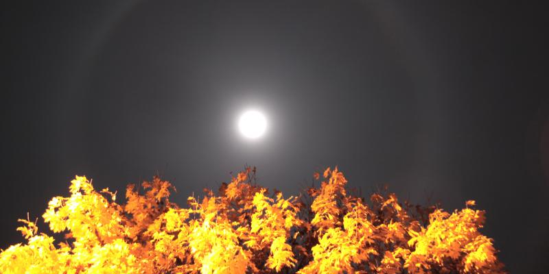 Autumn Lunar Halo