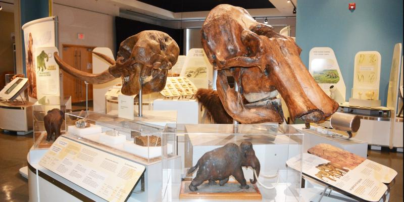 Ice Age Mammals Exhibit